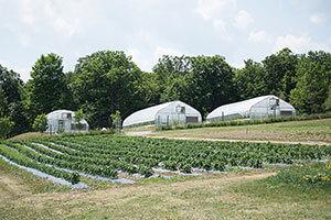 Wegmans Organic Farm and Orchard